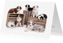 Zomaar kaarten - Zomaar een kaartje - Puppies