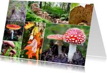 Zomaar kaarten - Zomaarkaart Herfst mix