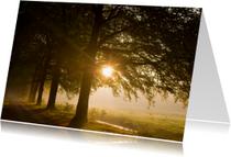 Condoleancekaarten - Zonlicht schijnt door pad met bomen