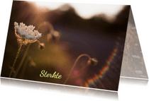 Condoleancekaarten - zonneschijn over veldbloem