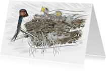 Kunstkaarten - Zwaluwnest