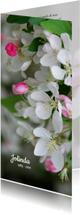Rouwkaarten - Rouwkaart bloesem sierappel