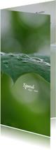 Rouwkaarten - Rouwkaart dauwdruppels op bladeren