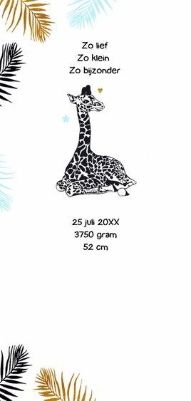 Geboorte Giraffebaby en moeder jongen 2