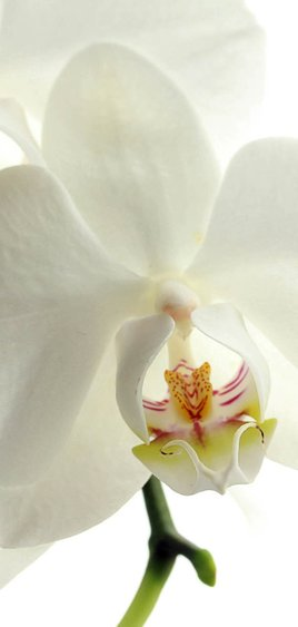 Rouwkaart witte bloemen 2