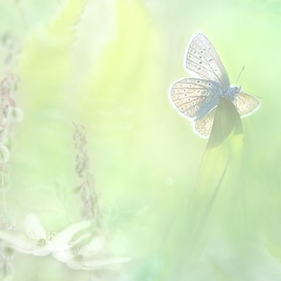 Beter met vlinder 2