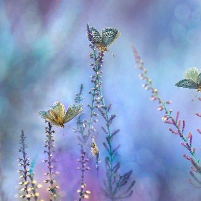 Blauw vlinder-fantasie 2