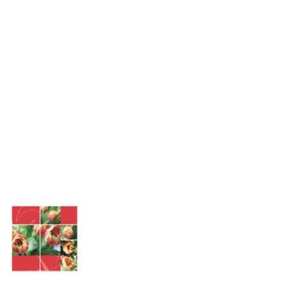 Bloemenkaart open tulp rozerood 2