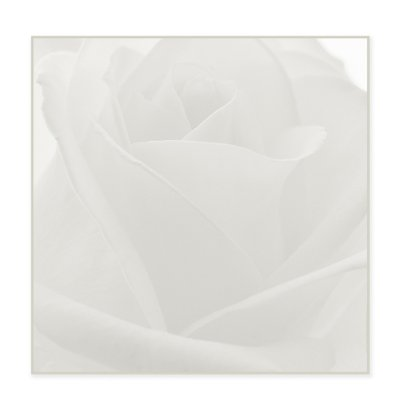 bloemenkaart rozen MM 2