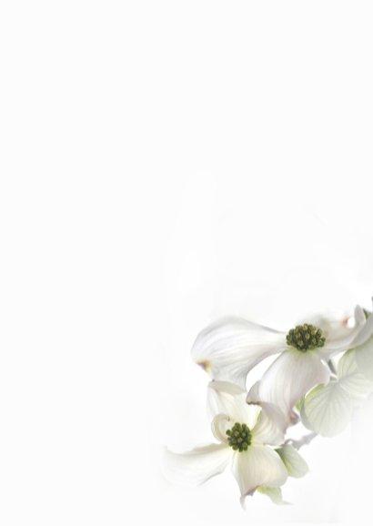 Condoleren met Cornus-bloemen 3