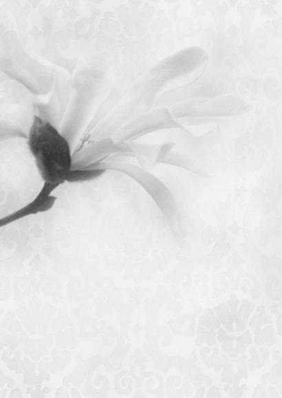Deelneming met magnolia -recht- 2