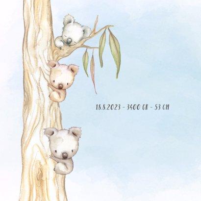 Geboortekaart koala-jongen met broertje en/of zusje 2