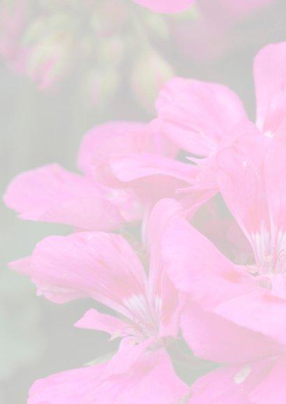 geraniums 2