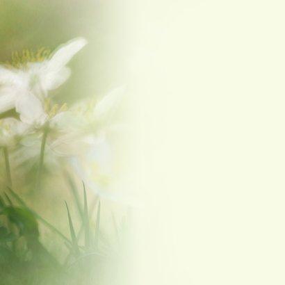 Jarig met witte anemonen 3