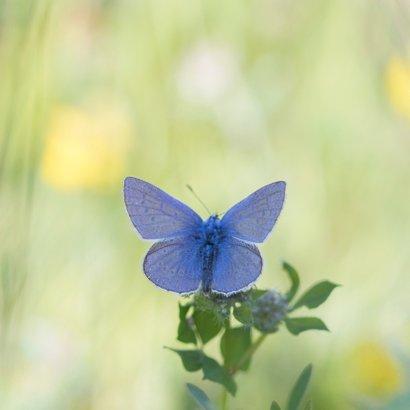Jarigkaart  blauwe vlinder 2