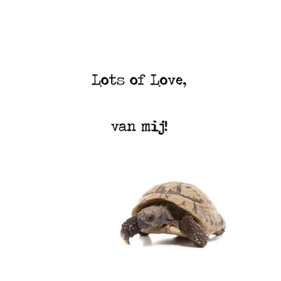 Liefde - I Turtle-y Love You - Schildpad 3