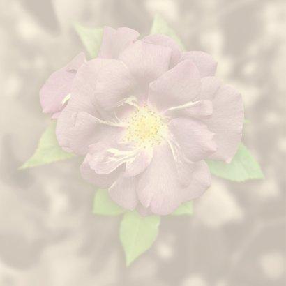 Mooie klassieke condoleancekaart paarse roos 2
