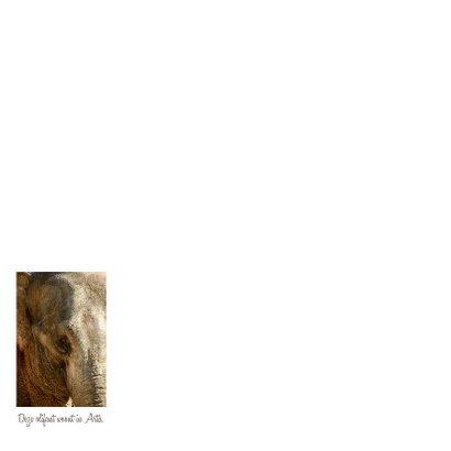 Olifant close-up 2