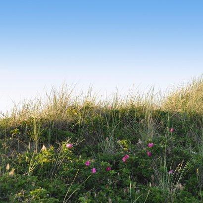 Rouwkaart Duin met roze bloemen 2