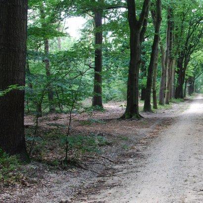 Rouwkaart foto van het bos 2