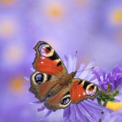 Verjaardag vrolijk met vlinder 2