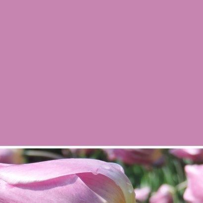 Verjaardagskaart roze tulp - SK 3