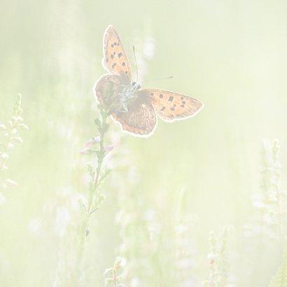 Vlinders in de zomer 2