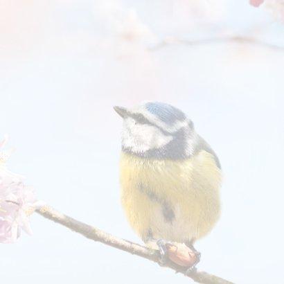 Vrolijke felicitatie met vogels 3