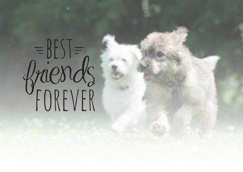 Dieren honden vriendschap 2