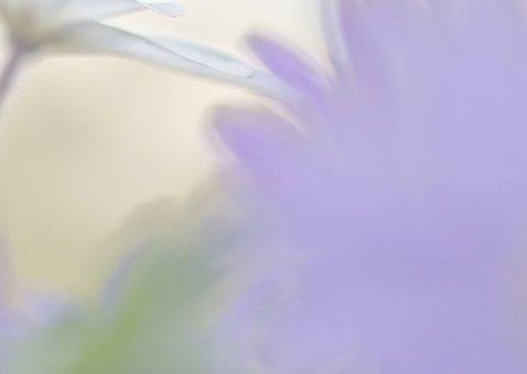 Feest met anemonen 3