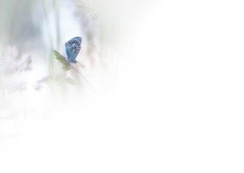 Sterkte - vlinder 3